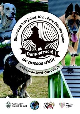 Festa Major: demostració de gossos d'elit a càrrec de Servi-Can Cabrils