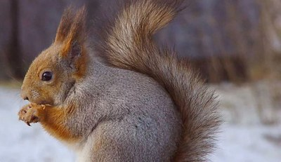 'Oriol l'esquirol', itinerari guiat i familiar pel Parc de la Serralada Litoral