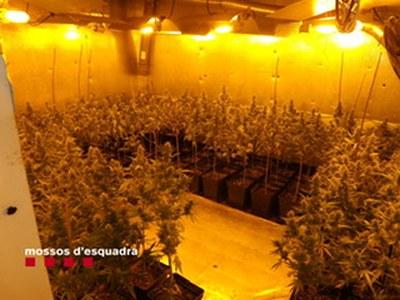 Desmantellada una plantació de marihuana en una casa a Premià de Dalt