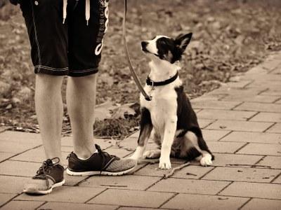 Els gossos només els pot treure a passejar una persona durant l'estat d'alarma i no més enllà de 300 metres del seu domicili