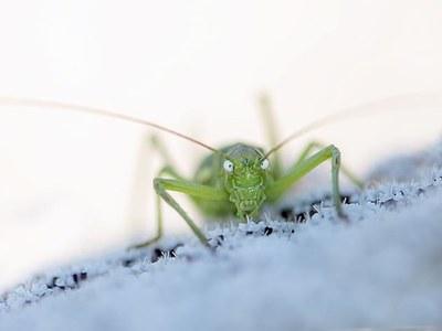 En marxa la 2a edició del projecte de ciència ciutadana per a l'elaboració d'una col·lecció virtual d'insectes i altres artròpodes del Parc de la Serralada Litoral