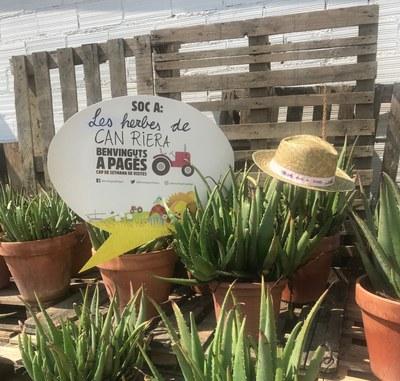 Les herbes de Can Riera ens conviden al  'Benvinguts a Pagès 2018'